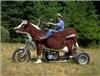 Bull_ride.jpg